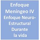 Curso Enfoque Meningeo IV